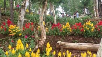 taman bunga pinus mangunan